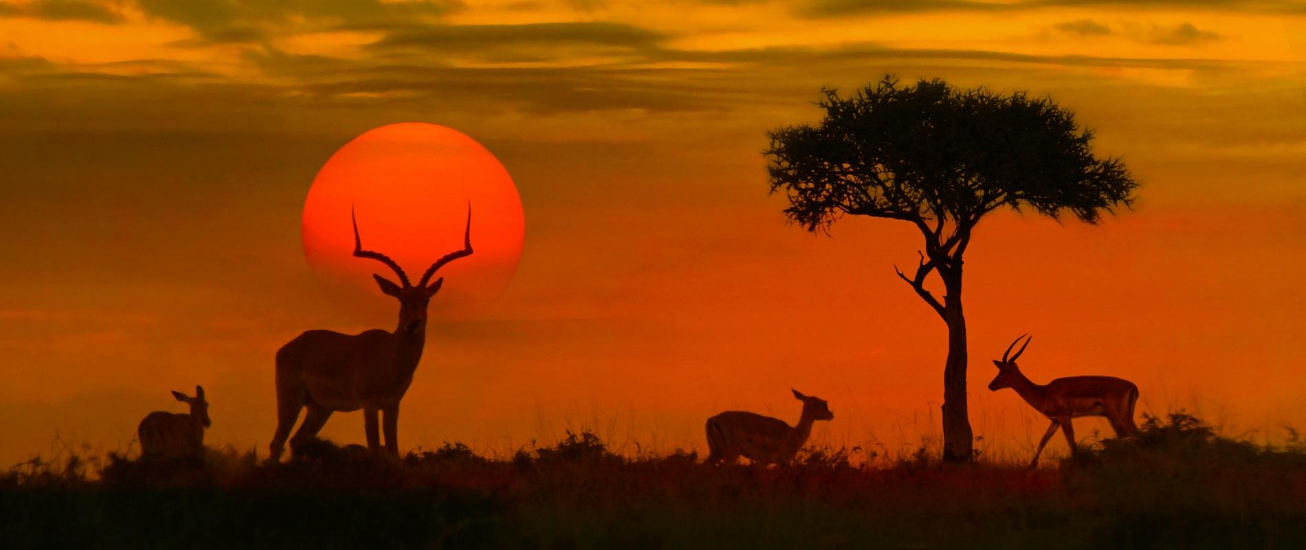 Maravillas de Sudáfrica